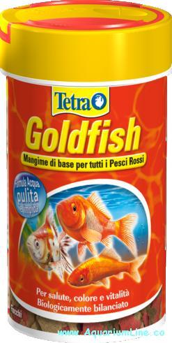 Tetra – GoldFish